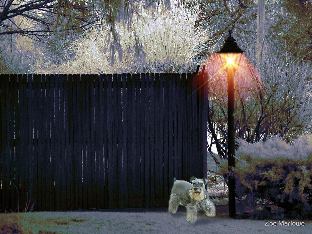 The Wintery Fence by Zoe Marlowe