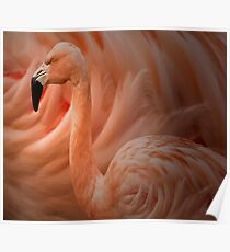Zoology - Chilean Flamingo Poster