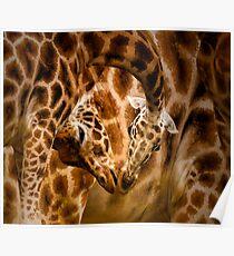 Zoology - Northern Giraffe Kiss Poster