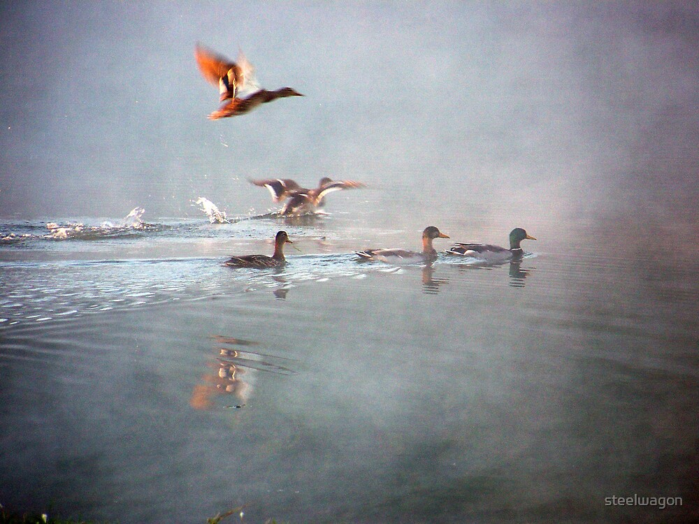 Misty Morning by steelwagon
