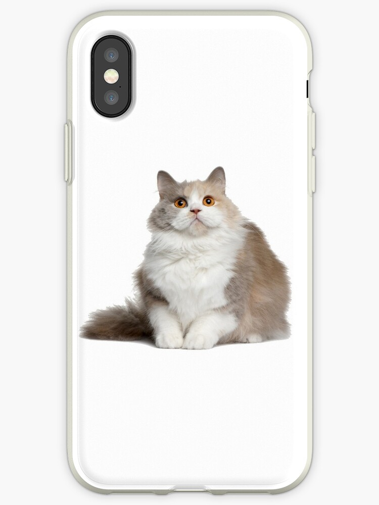 low priced 8fa34 1b8b1 'little chubby fat cat ' iPhone Case by Jesstheoo