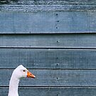 The Goose by Lissie EJ