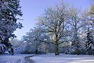 Path through Winter Wonderland by steppeland