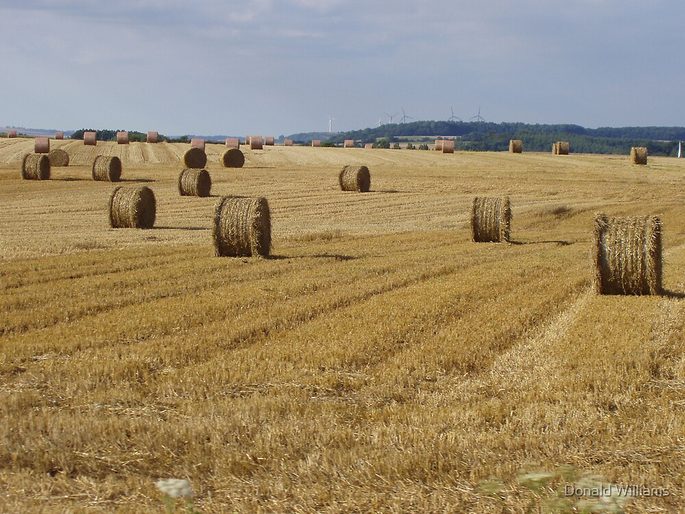 Haystacks near Tilly, France, 2007 by Donald Williams