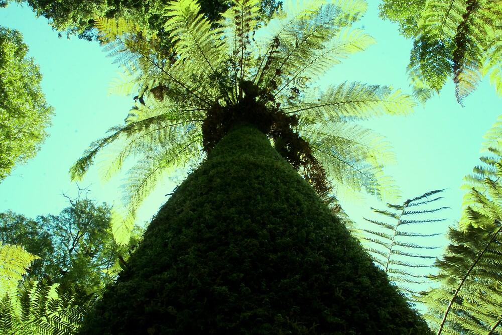 Ancient Tree Fern of the Tarkine by Jeff Barnard