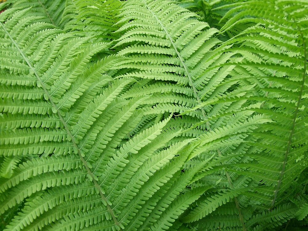 Fern abstract by sassygirl