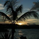 Palm Tree Silhouette by hcd202