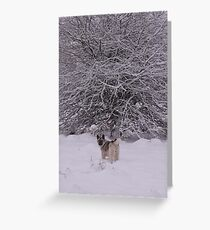 This Tree for Christmas  Greeting Card