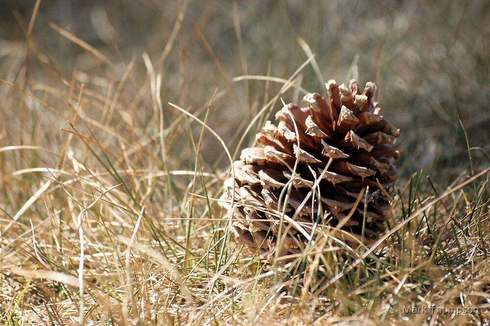 Pine Cone by Mark Thompson