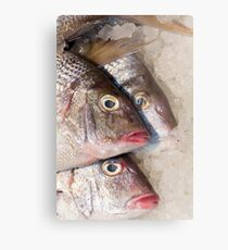 Red Snapper Ice Metal Print