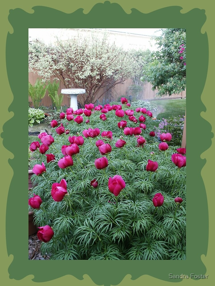 Oriental Peonies by Sandra Foster