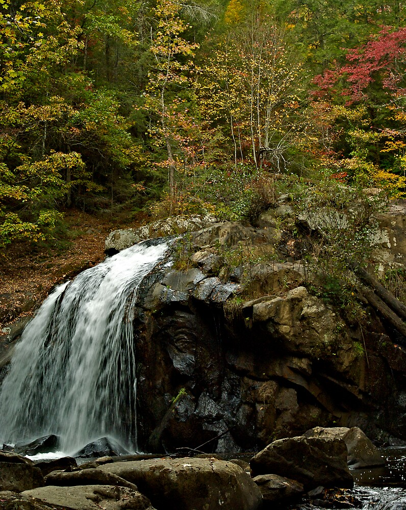 Turtletown Creek East Falls II by John O'Keefe-Odom
