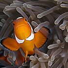 Anemone Fish by Henry Jager