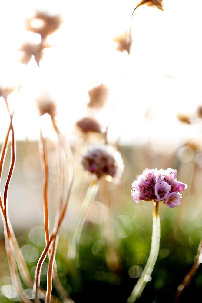 Flowertime by kolografie