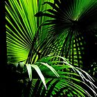 Cabbage Palm Leaves by Gabrielle  Lees