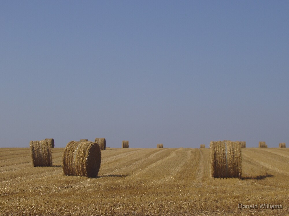 Hay, near Tilly, France, 2006 by Donald Williams