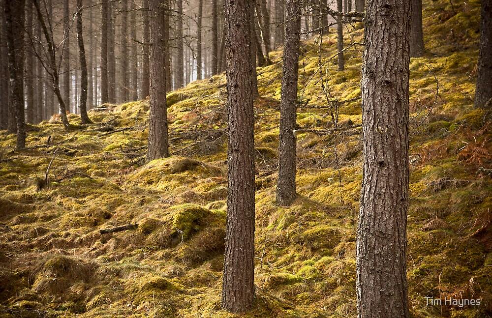 Trees by Tim Haynes