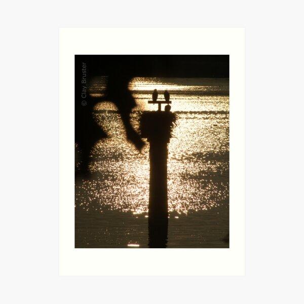 Osprey Nesting At Sunset Art Print