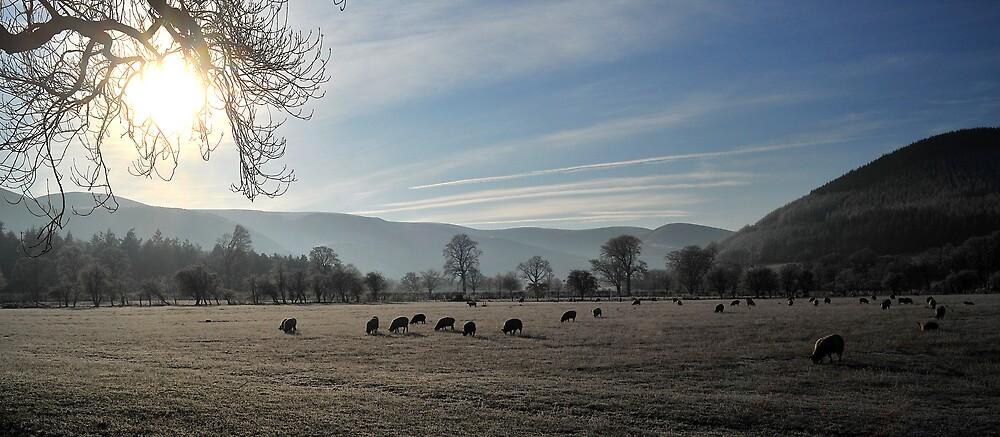 Winter Grazing Peebles by photobymdavey
