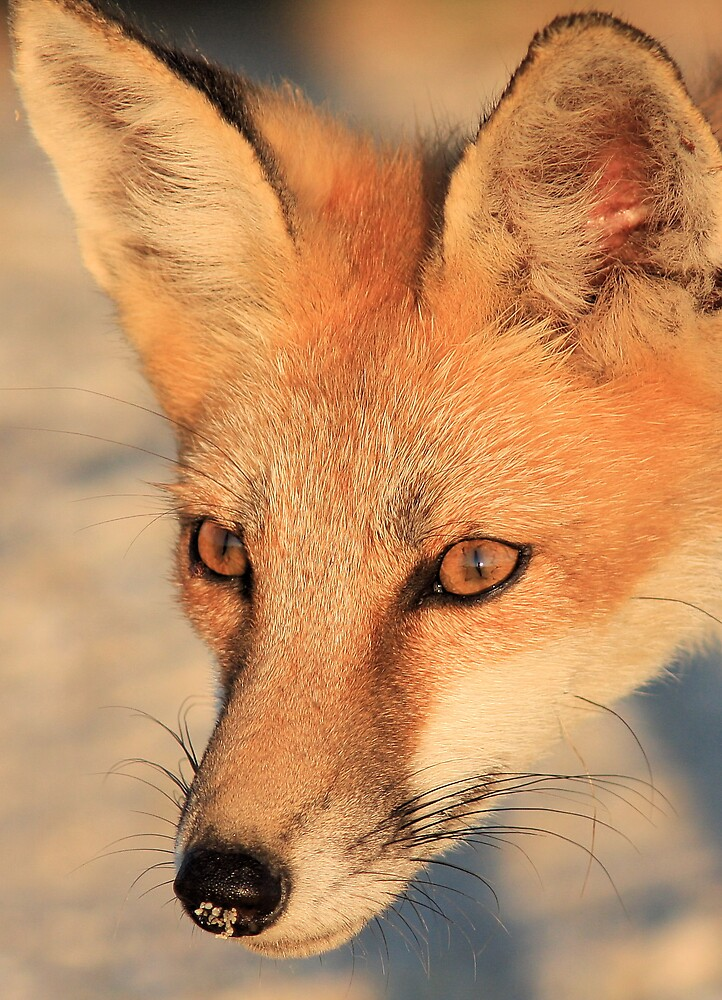 The eyes have it. by Ron  Charest