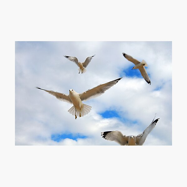 Angels In Flight Photographic Print