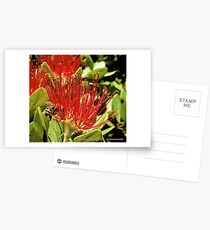D1G1TAL-M00DZ ~ JUST PHOTOS ~ FLORAL ~ Pohutukawa Flower and Bee by tasmanianartist Postcards