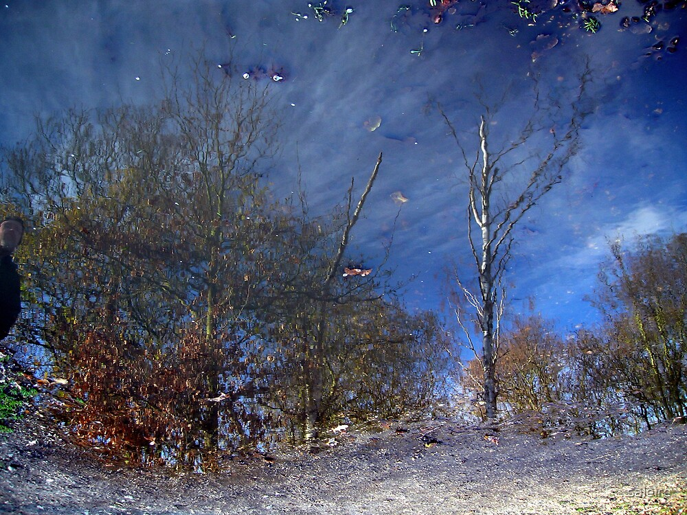 Reflections in a Puddle by saleire