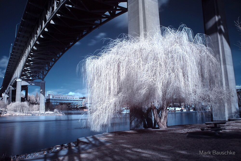 Midnight Willow by Mark Bauschke