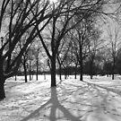 Winter's Beauty by Dmarie Becker