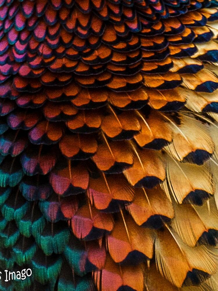 Natural World - Pheasant Plumage III by AliusImago