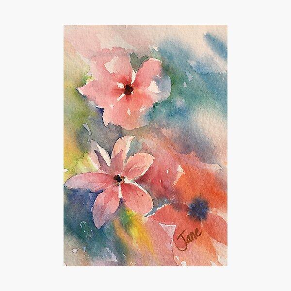 Baby Pinks Photographic Print