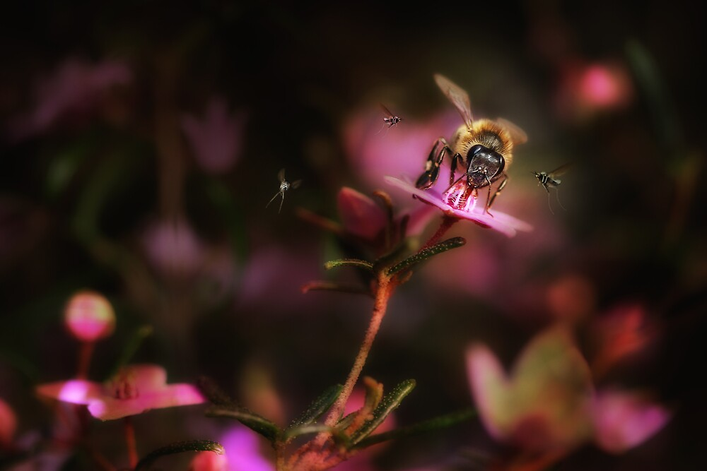 a bee and three very small insects by rozdesign