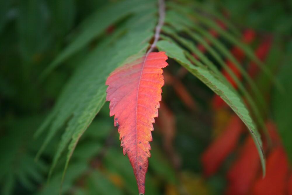 Fall transforming by Lisabeth Mackall