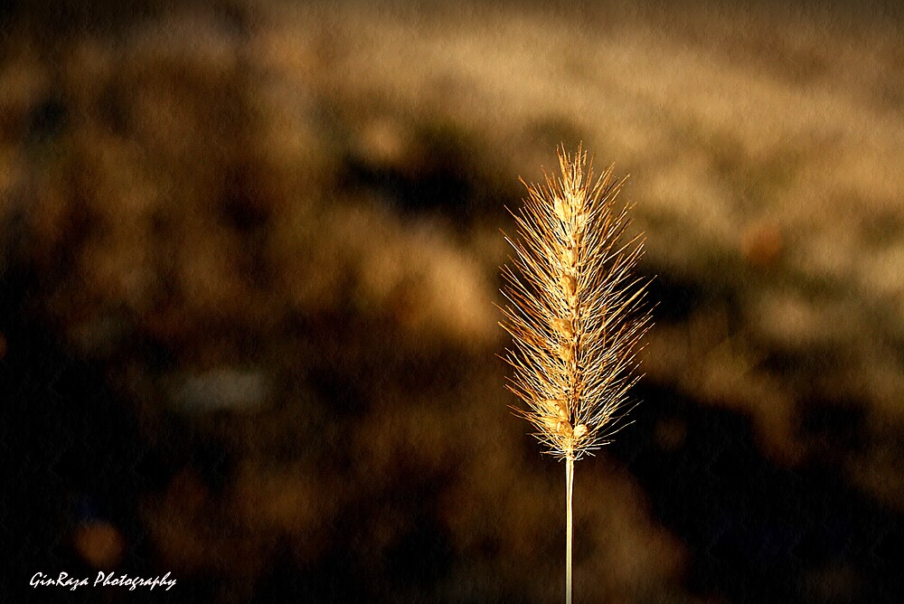 Fall harvest by Ginger