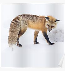 RED Fox In The Snow Duvet Cover & Pillowcase Set Bedding Poster