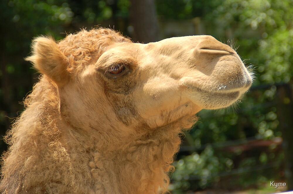 Camel by Kyme