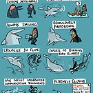 Dolphins and Marina Biologists by rohanchak