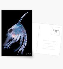 Marine planktonic larva Postcards