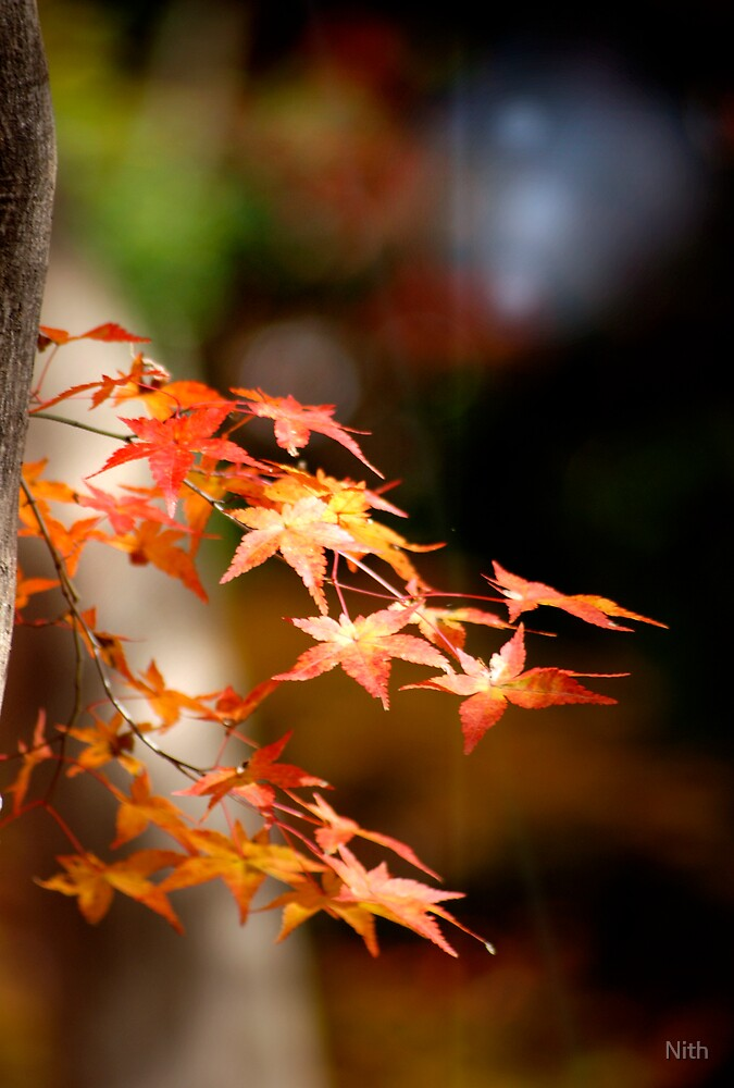Bye Autumn by Nith
