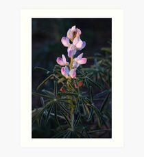 Lupin Flower Art Print