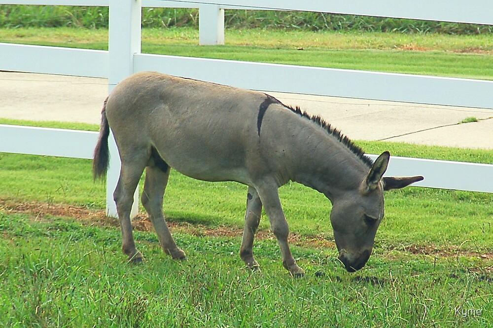 Donkey by Kyme