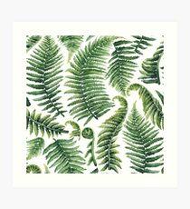 Watercolor fern leaves Art Print