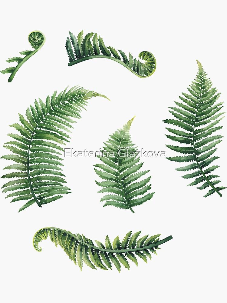 Watercolor fern leaves by Glazkova
