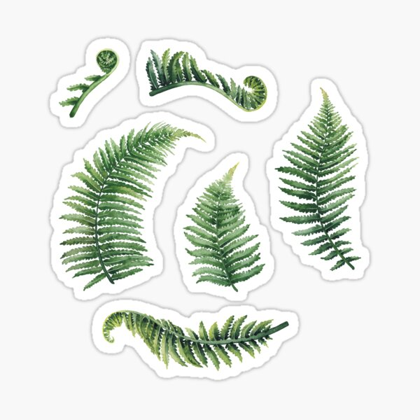 Watercolor fern leaves Sticker