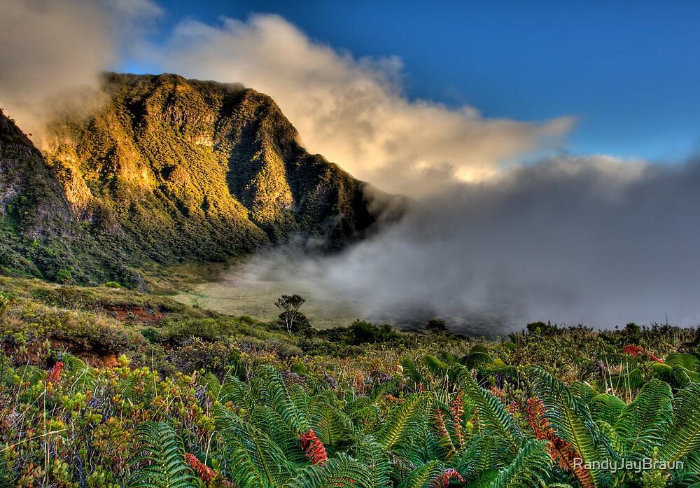 The Paliku Rainforest, Maui, Hawaii by Randy Jay Braun