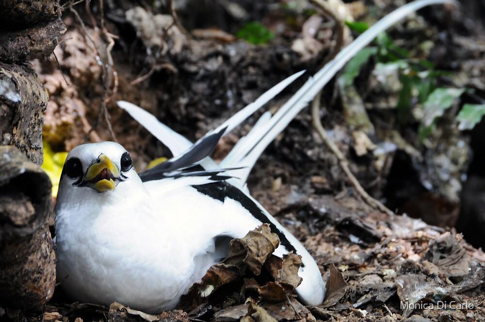 Seychelles's bird by Monica Di Carlo