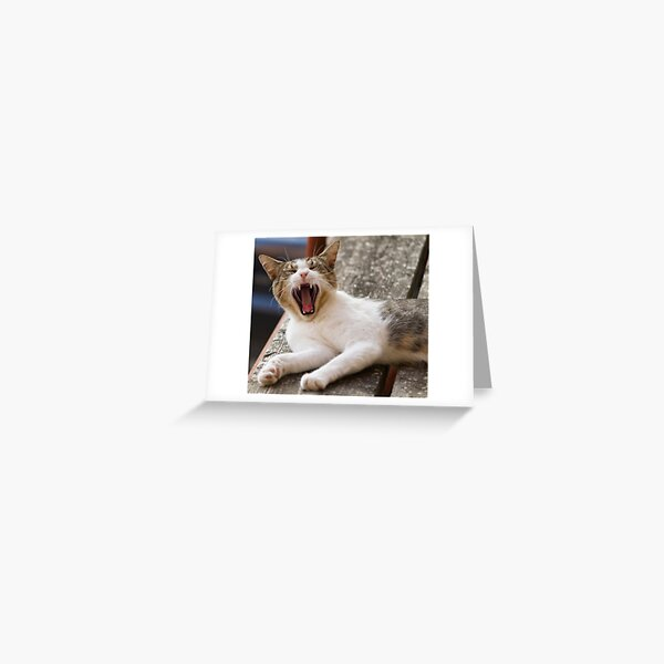 cute cat and nap time Greeting Card