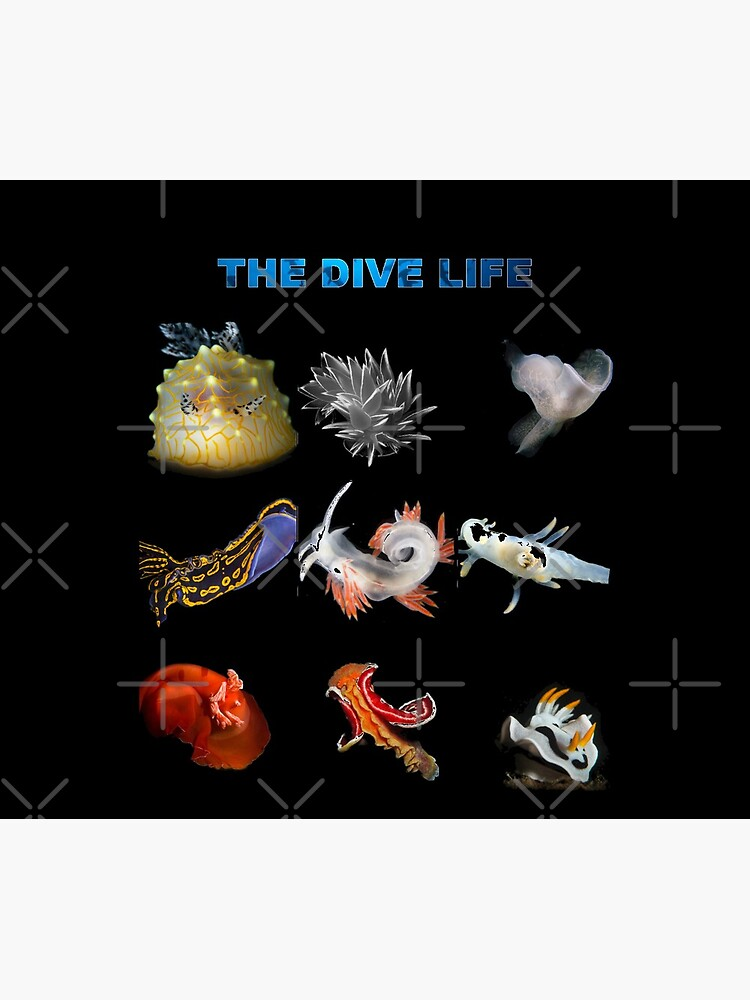 The Dive Life - Nudibranch by surrealitee