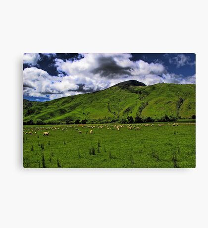 The New Zealand Countryside Canvas Print