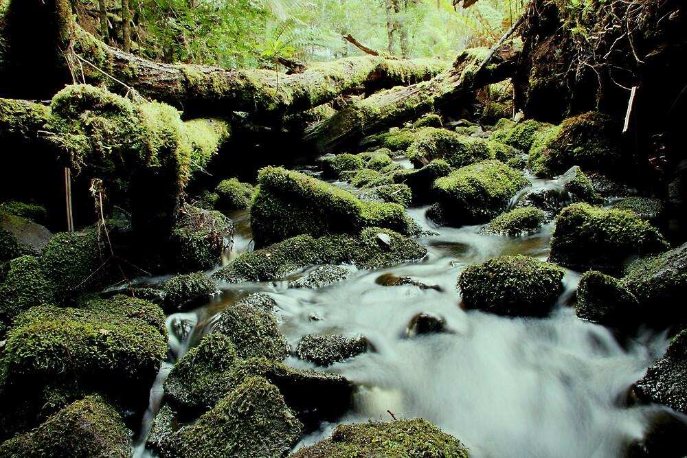 Tarkine stream below the falls by Jeff Barnard
